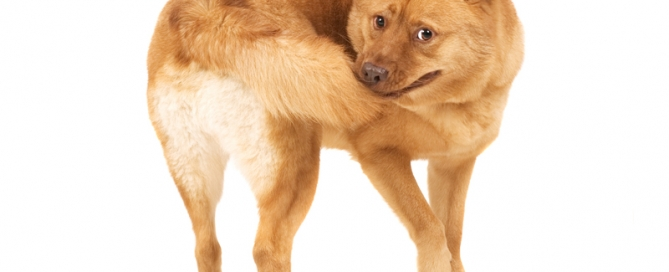 Buckaroo Marketing - Dog & Tail
